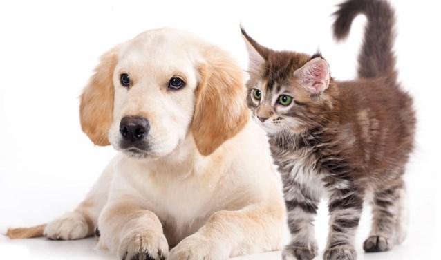 Radar vergelijk dierenverzekering
