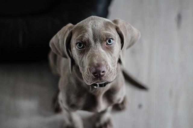 puppy verzekeren