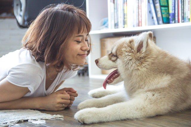Ohra dierenverzekering