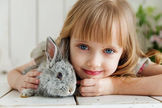 Alleen bij Petplan is het mogelijk om een konijn te verzekeren