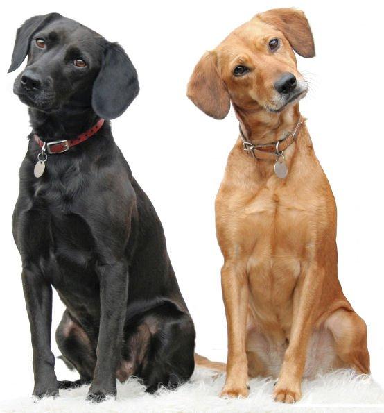 Hond wel of niet verzekeren