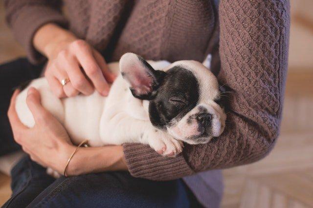 Huisdierenverzekering Petplan