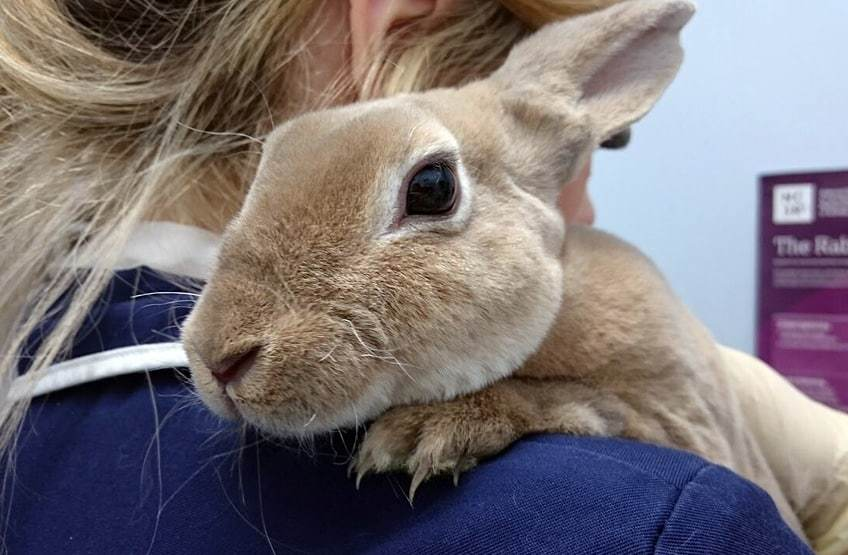 Rabbit Haemorrhagic Disease
